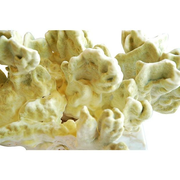 Natural Green Fire Coral on White Marble Slab - Image 7 of 7