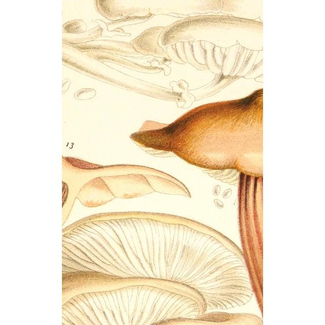Antique 1891 English Mushrooms Botanical Print - Image 2 of 3