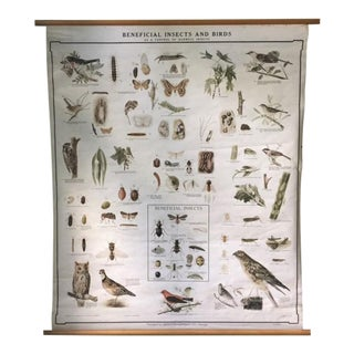 Early 1900s Denoyer-Geppert Insects & Birds Pull Down Chart