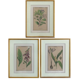 Antique English Botanical Engravings-Set of 3