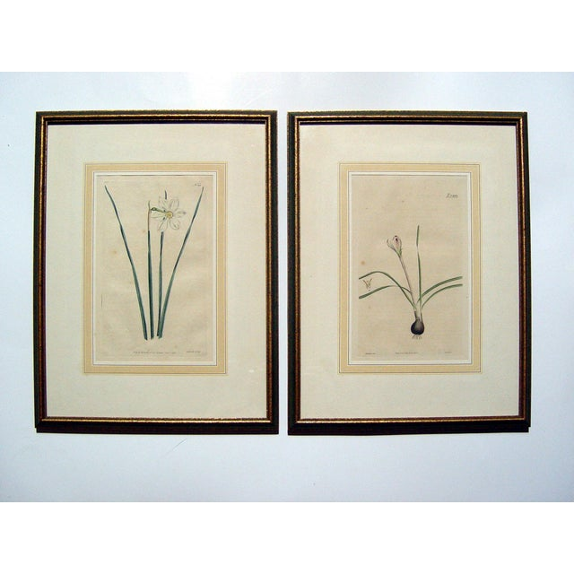 Image of Antique 1792 Botanical Engravings - A Pair