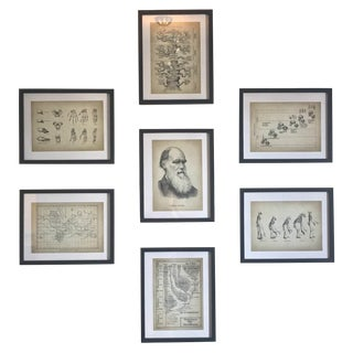 Vintage Darwin Journal Excerpt Prints - Set of 7