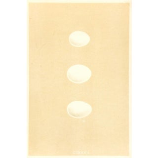 Antique Egg White Lithograph Print, 1859