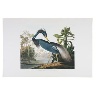 Louisiana Heron Audubon Leipzig Edition