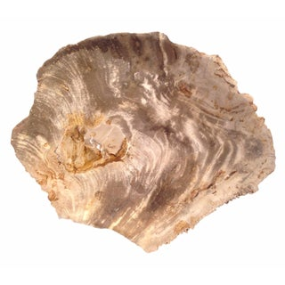 Petrified Wood Charger