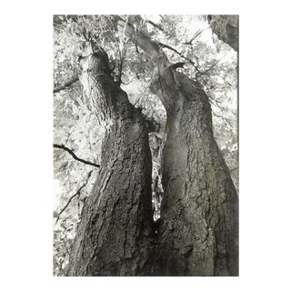 Curving Tree Photograph