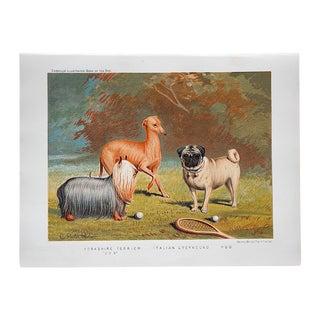 Antique Dog Lithograph - Yorkie, Greyhound, Pug