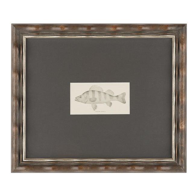 Vintage Fish Prints Elegantly Framed - Pair - Image 3 of 3