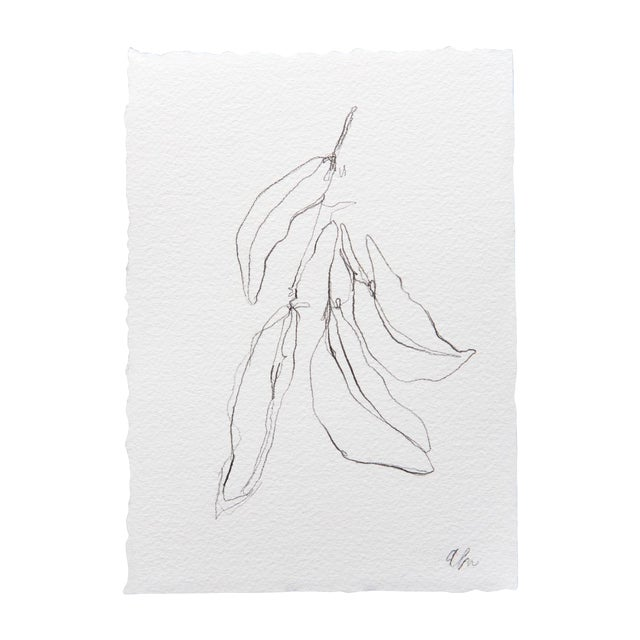 Bay Leaf III Pencil Drawing - Image 1 of 3