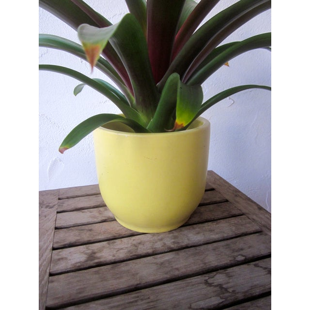 Gainey Architectural Pottery Yellow Planter Pot - Image 5 of 6