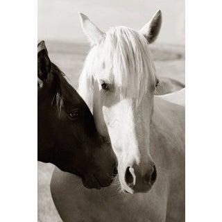 Edelman Sermo Per Equus Lindisimo Photograph