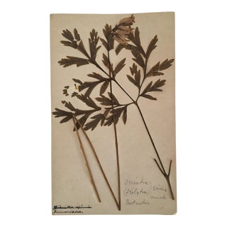 Antique Botanical Pressed Leaves