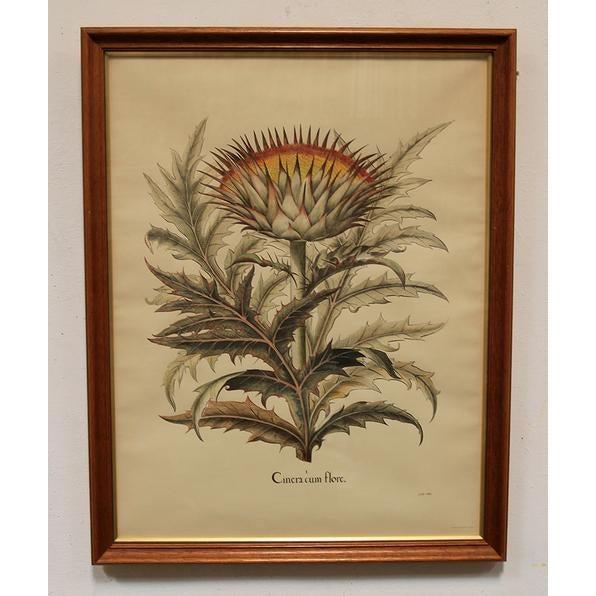 """Cinera Cum Flore"" Hand-Tinted Botanical Print - Image 4 of 8"