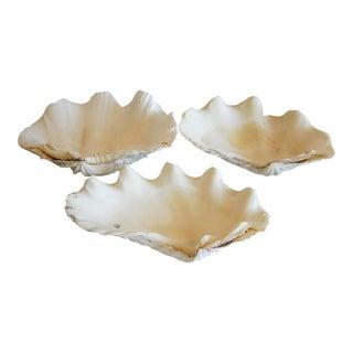 Antique Nautical Seashells Clamshells - Set of 3