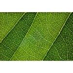 "Image of Natalie Kinnear ""Leaf Lines III"" Framed Print"