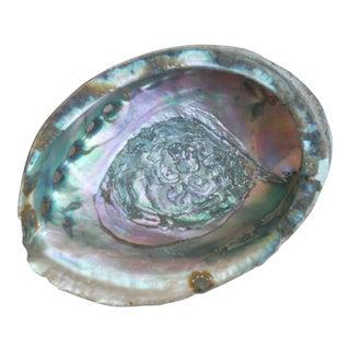 Natural Abalone Seashell