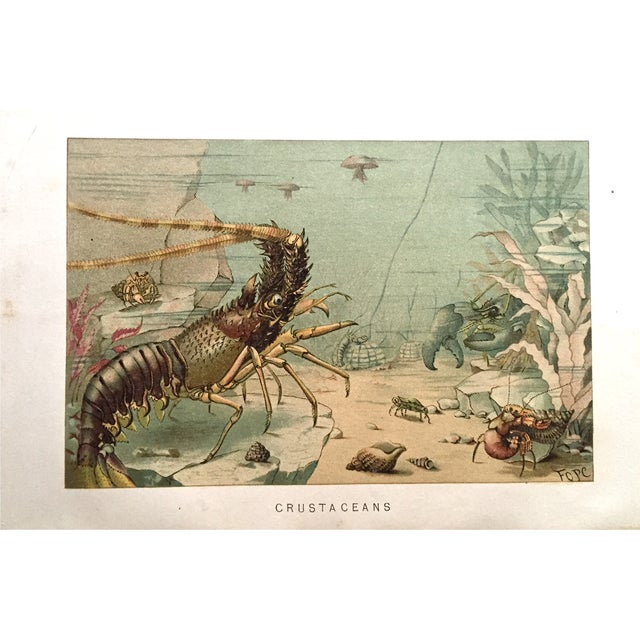 Lobster Antique Lithograph C.1900 - Image 1 of 3