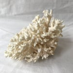 Image of Decorative Natural Coral