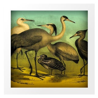 Vintage Water Birds Archival Print