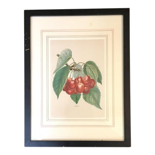 English Red Cherries Lithograph, Circa 1890