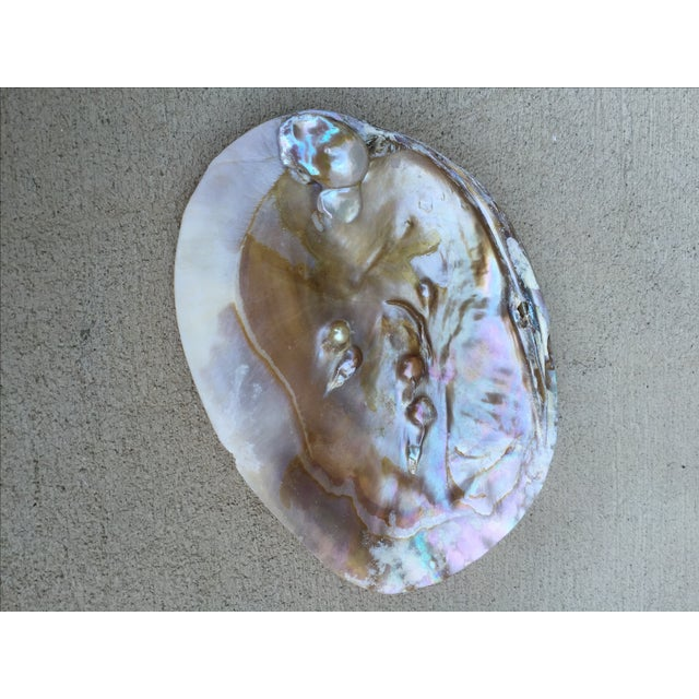 Natural Shell Tray With Baroque Pearl - Image 6 of 11