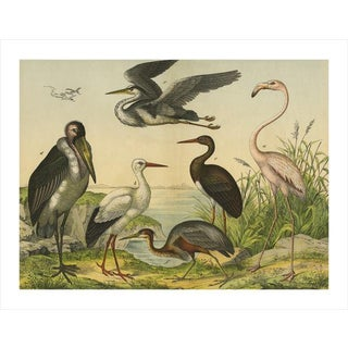 Antique Flamingo & Friends Archival Print