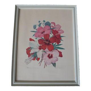 Vintage Athos Menaboni Hibiscus Botanical Print