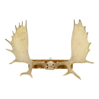Moose Antler Rack Mount