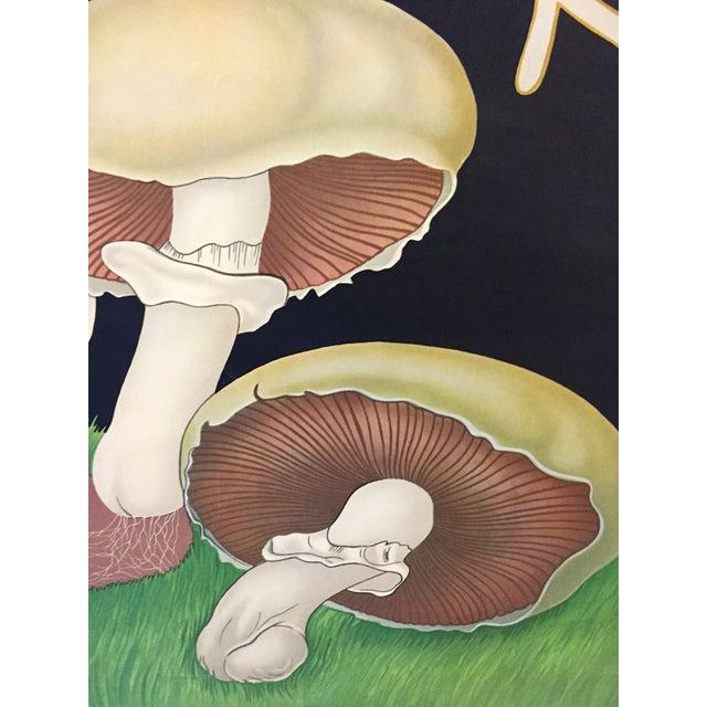 1973 Jung-Koch-Quentell Mushroom School Wall Chart - Image 4 of 8