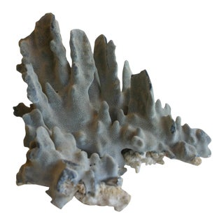 Natural Blue Coral Specimen