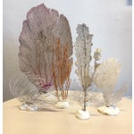 Image of Vintage Grouping of Sea Fans - Set of 6