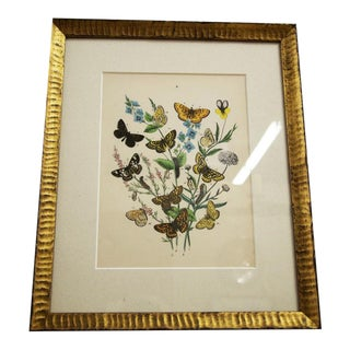 Custom Framed Butterfly Lithograph