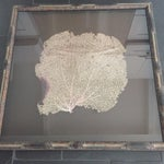 Image of Coral Sea Fan in Bamboo Frame