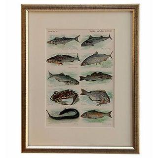 Vintage Framed Print of Sea Life