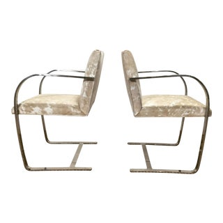Mies Van Der Rohe Brno Chairs for Knoll in Brazilian Cowhide - Pair