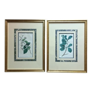 1809 Curtis Framed Botanical Prints - A Pair