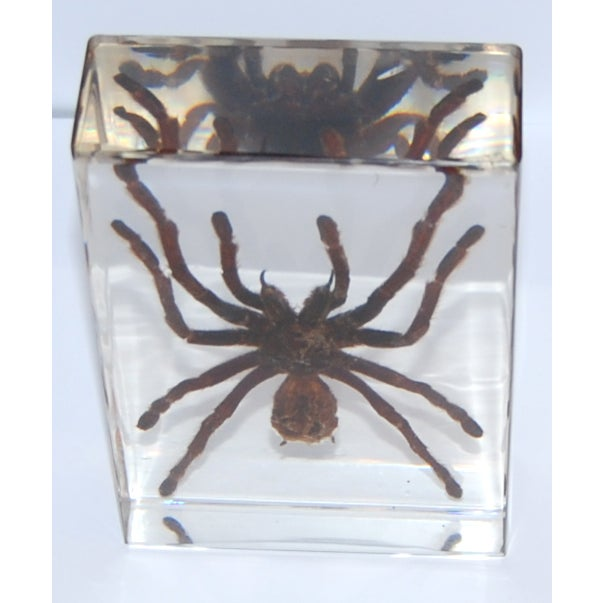 Image of Tarantula Paperweight