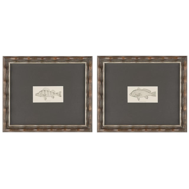 Vintage Fish Prints Elegantly Framed - Pair - Image 1 of 3