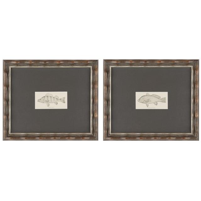 Image of Vintage Fish Prints Elegantly Framed - Pair
