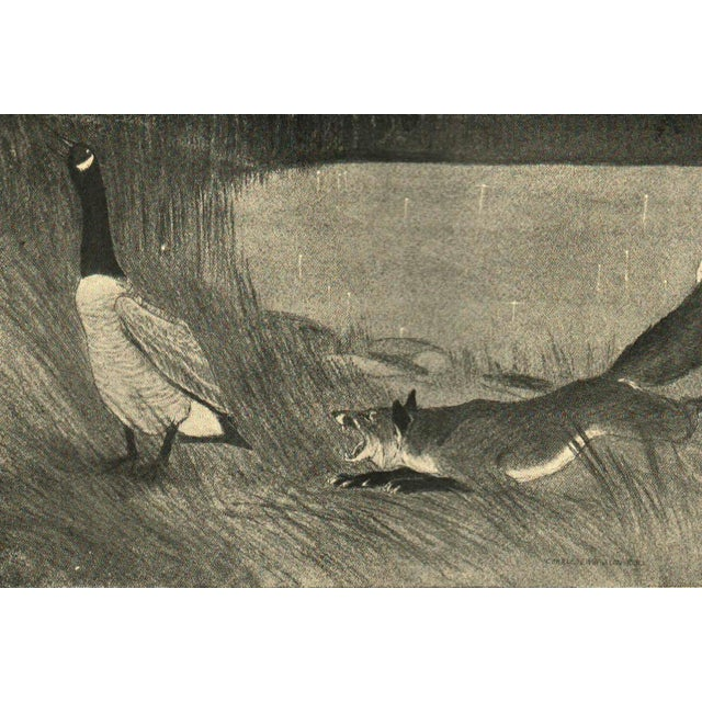 An Illustrated Book of Animal Life - Image 4 of 4