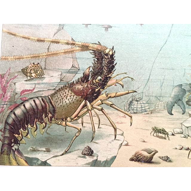 Lobster Antique Lithograph C.1900 - Image 2 of 3