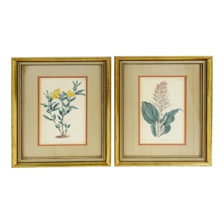 Framed Vintage Botanical Etchings - A Pair