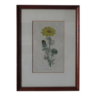 English Curtic Yellow Sunflower Botanical Print