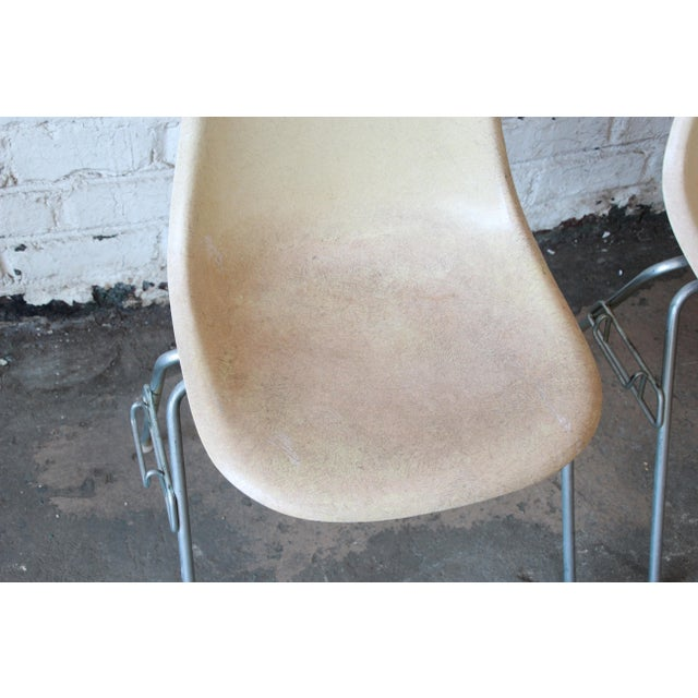 Charles Eames for Herman Miller DSS Stacking Chairs in Parchment - Set of 4 - Image 7 of 9