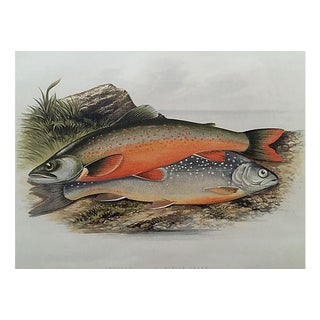 "1879 Sport Fish Lithograph ""Alpine Char"""
