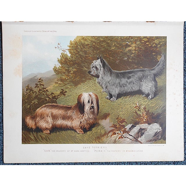 """Antique Dog Lithograph """"Skye Terriers"""" - Image 2 of 3"""