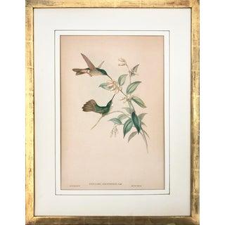 Antique John Gould Hummingbird Lithograph