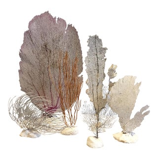 Vintage Grouping of Sea Fans - Set of 6