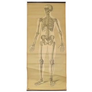Skeleton Poster from the Deutsche Hygiene Museum