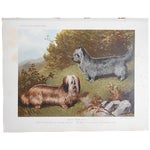"""Image of Antique Dog Lithograph """"Skye Terriers"""""""
